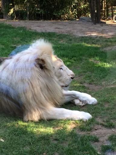 zoo 009 (63)