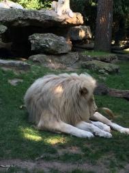 zoo 009 (1)