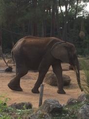 zoo 009 (12)